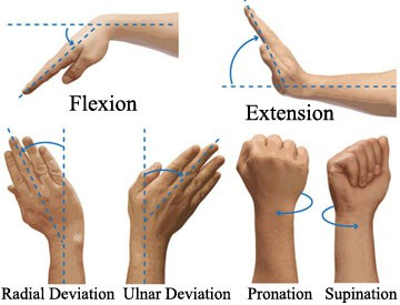Flexion.Extension.Pronation.Supination